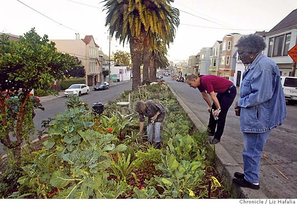 QUESADA_093_LH.JPG Annette Smith doing some garden work in Quesada Garden. Neighbors Jeffrey Betcher and Corrine Pettus at right. A look at the 1700 block of Quesada Avenue in the Bayview a year after the community garden had taken shape in the median strip. Shot on 9/2/04 in San Francisco. LIZ HAFALIA / The Chronicle Ran on: 09-15-2004 Annette Young Smith, who helped start the community garden in a median strip on the 1700 block of Quesada Avenue two years ago, works among the many kinds of plants as neighbors Corrine Pettus and Jeffrey Betcher stop by to watch. Ran on: 09-15-2004 Annette Young Smith, who helped start the community garden in a median strip on the 1700 block of Quesada Avenue two years ago, works among the many kinds of plants as neighbors Corrine Pettus and Jeffrey Betcher stop by to watch. MANDATORY CREDIT FOR PHOTOG AND SF CHRONICLE/ -MAGS OUT