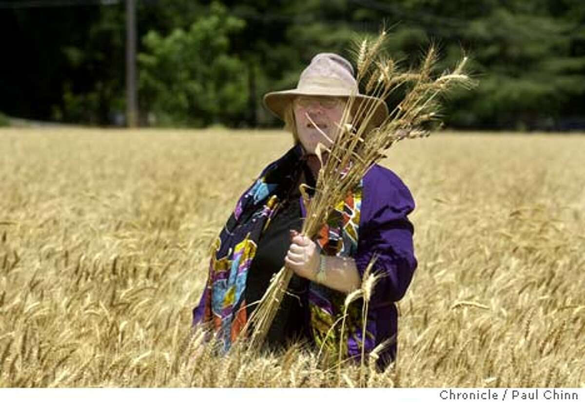 cropcircles058_pc.jpg Lily Kyle grabbed a handful of the flattened wheat stalks from one of the circles. Crop circles in a wheat field have attracted the curious on 7/2/03 in Rockville (Solano Co). PAUL CHINN / The Chronicle