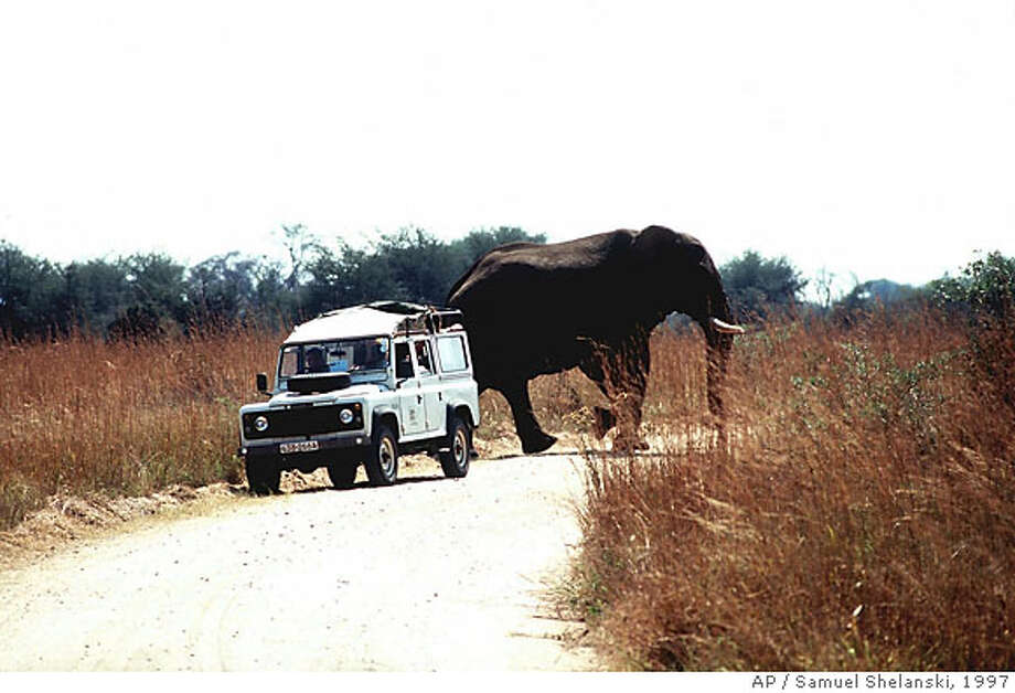 A bull elephant walks behind a vehicle carrying tourists in Hwange National Park, Zimbabwe in May 1997. African elephants are the largest land animal in the world. A fully grown bull can weigh more than 6.5 tons. (AP Photo/Samuel Shelanski) MAGS OUT NO SALES  Ran on: 04-01-2007  Warning, skinny sumo wrestlers: It appears you might encounter opponents at this spot in Tokyo. Submit your unintentionally funny sign photos to www.signspotting.com. (Do not send them to The Chronicle.) If we use one, you will receive $50 plus the chance to win an around-the-world ticket. Photo: SAMUEL SHELANSKI