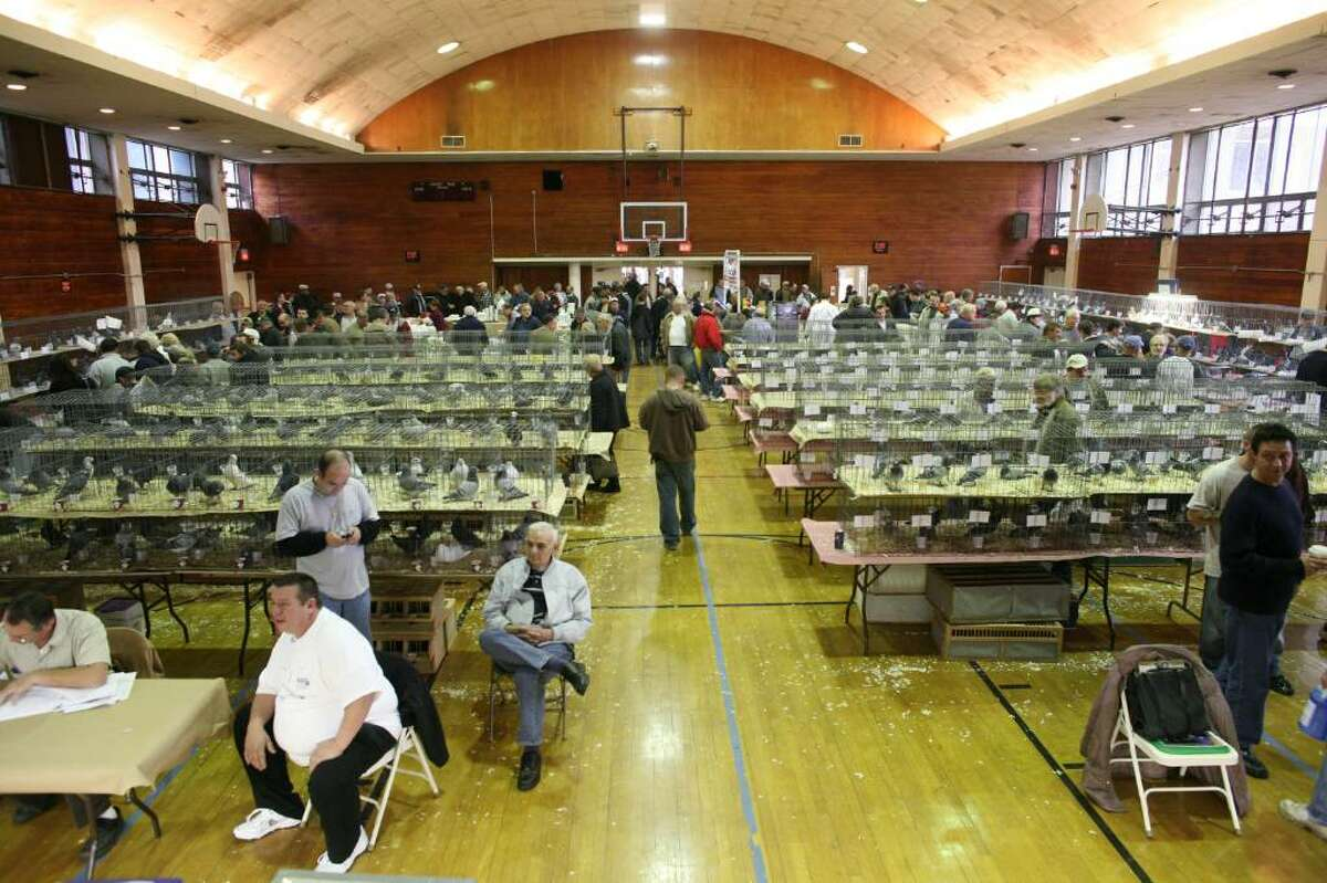 Pigeon's took over the basketball court at the Eastern Greenwich Civic Center during this year's Annual Racing Pigeon Classic Show on Saturday.