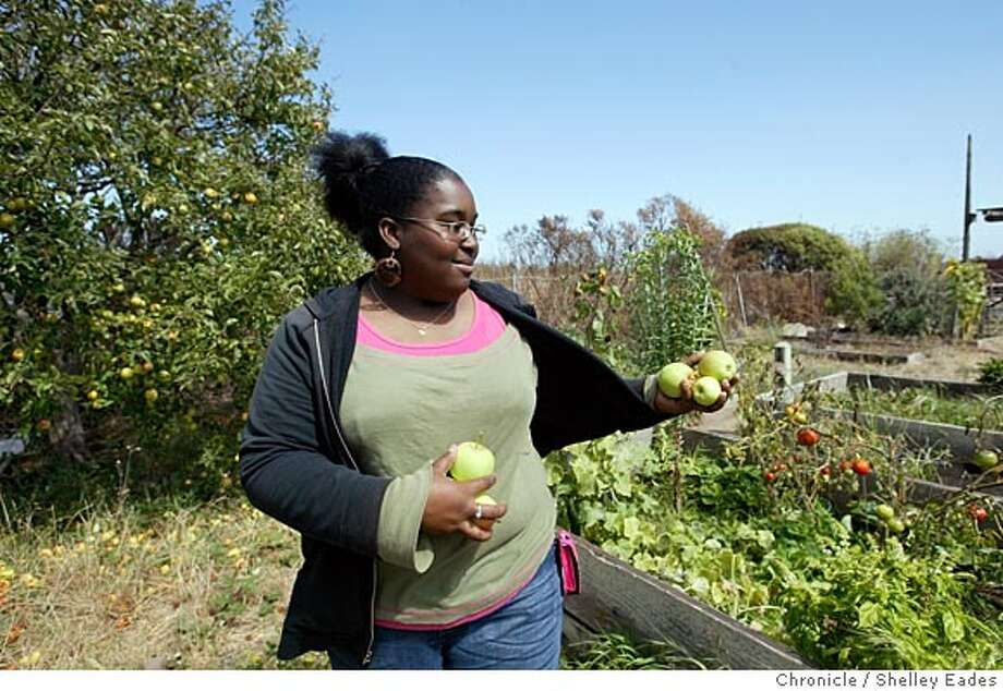 "On 9/16/05 in San Francisco.  LaConstance ""Connie"" Shahid picks some apples for her family at the Candlestick Community Garden, Shahid is the winner of the Brower Youth Award for her work to restore the Yosemite Wetlands adjacent to her inner-city San Francisco neighborhood of Hunter's Point.  Chronicle Photo by Shelley Eades Photo: Shelley Eades"