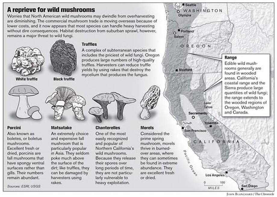 A Reprieve for Wild Mushrooms. Chronicle graphic by John Blanchard