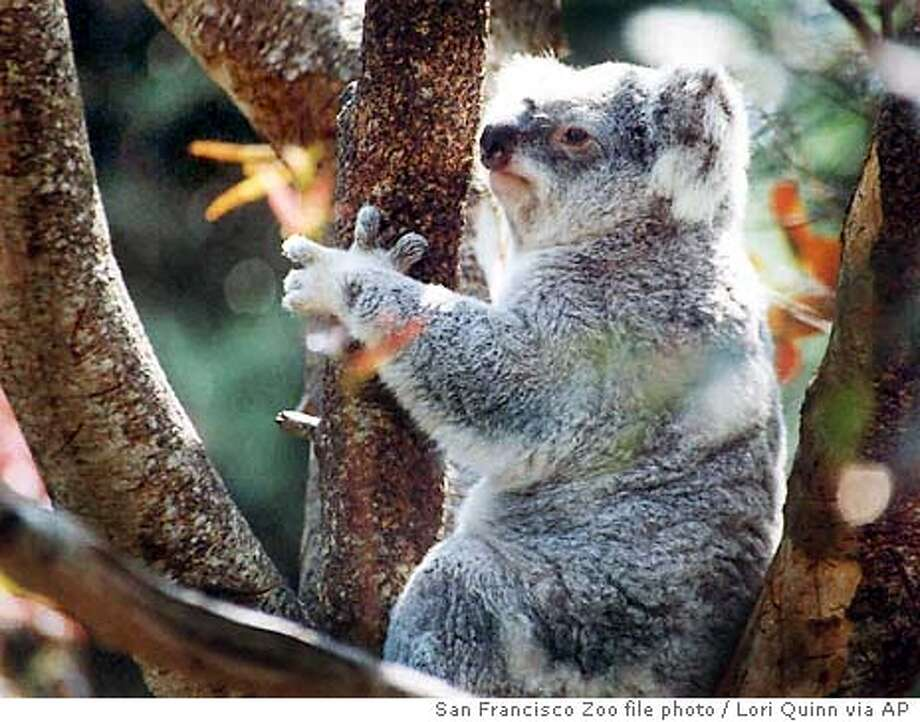 koala_6/13/2003_B/W_5star_Metro_a20_34p6xfull_rich-7067 Photo: LORI QUINN