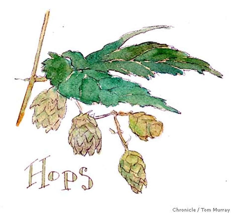 Hops. Chronicle illustration by Tom Murray