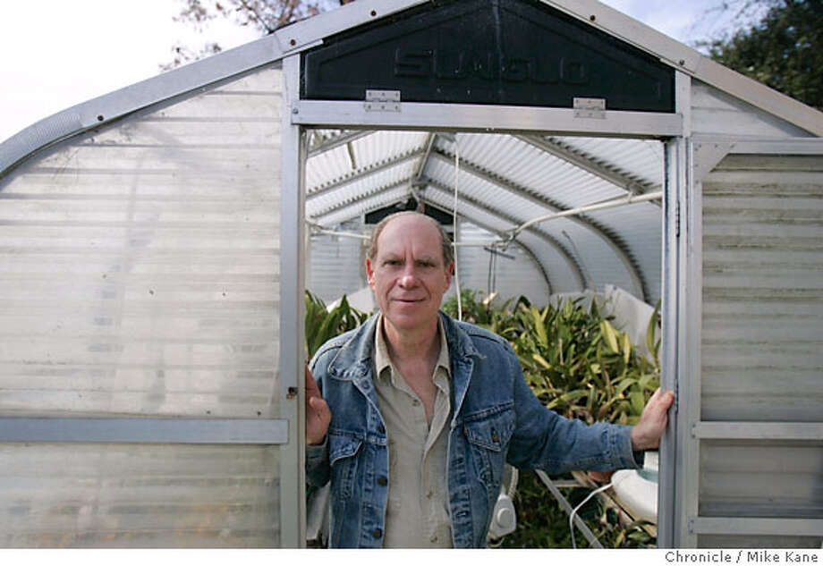 Ed Rosenthal, longtime Bay Area marijuana activist and writer, poses in front of a greenhouse filled with orchids at his office in Oakland, CA, on Wednesday, March, 14, 2007. photo taken: 3/14/07 Mike Kane / The Chronicle **Ed Rosenthal Photo: MIKE KANE