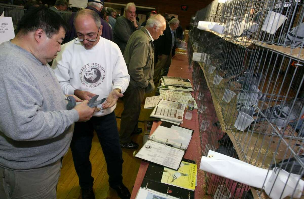 Tom DeMartino and Francis Lee talk about the price of a pigeon during Saturday's National Show Racing Pigeon Association's America's Annual Racing Pigeon Classic Show at the Civic Center in Old Greenwich.