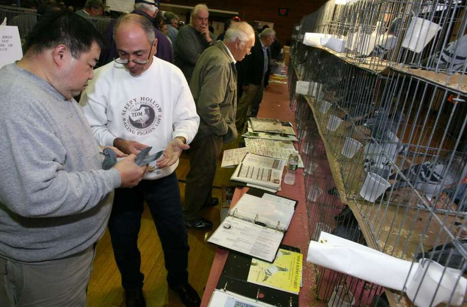 Tom DeMartino and Francis Lee talk about the price of a pigeon during Saturday's National Show Racing Pigeon Association's America's Annual Racing Pigeon Classic Show at the Civic Center in Old Greenwich. Photo: David Ames / Greenwich Time