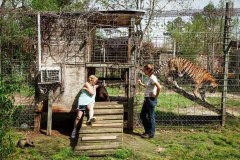 Dangerous exotic animals make home in Texas - Houston Chronicle