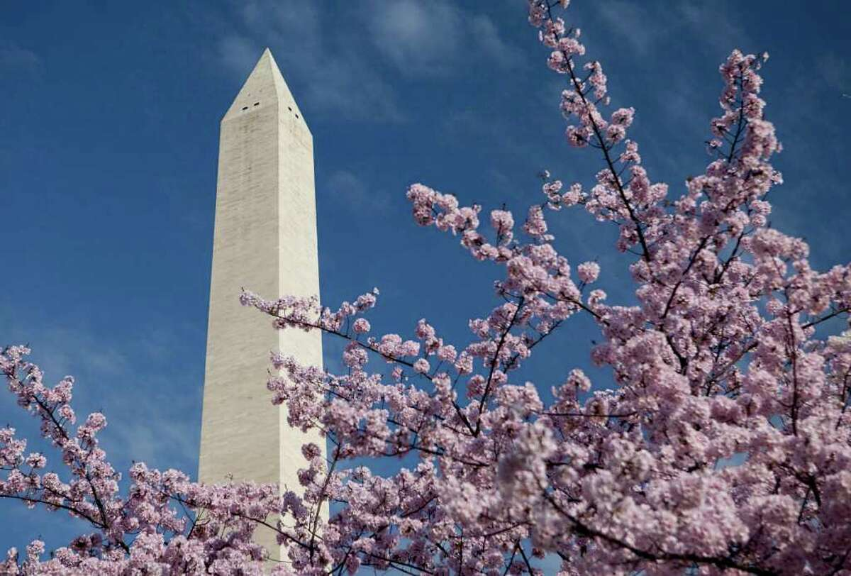 The Washington Monument stands behind cherry trees blossoming in Washington, D.C., U.S., on Monday, March 19, 2012. 2012 marks the hundredth year since Japanese flowering cherry trees first graced the National Mall. Over one million people are expected to attend the National Cherry Blossom Festival this year. Photographer: Andrew Harrer/Bloomberg