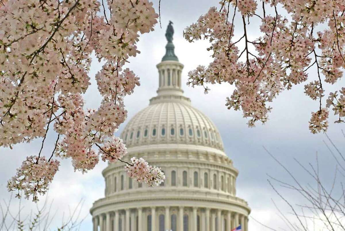 WASHINGTON, DC - MARCH 19: A Dogwood tree is in full bloom in front of the U.S. Capitol on March 19, 2012 in Washington, DC. Unseasonably warm weather has caused Washington's spring flowers and the famous cherry blossoms to bloom early.