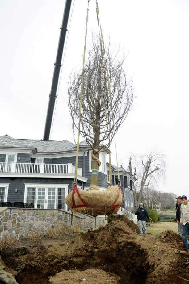 A 23,000-pound tree from Maryland is hoisted by a crane from A-Quick-Pick around the home at 130 Cummings Point Road in Stamford to be placed by Falling Waters Landscaping of Westport employees in its new location on the property. Photo: Lindsay Niegelberg / Stamford Advocate
