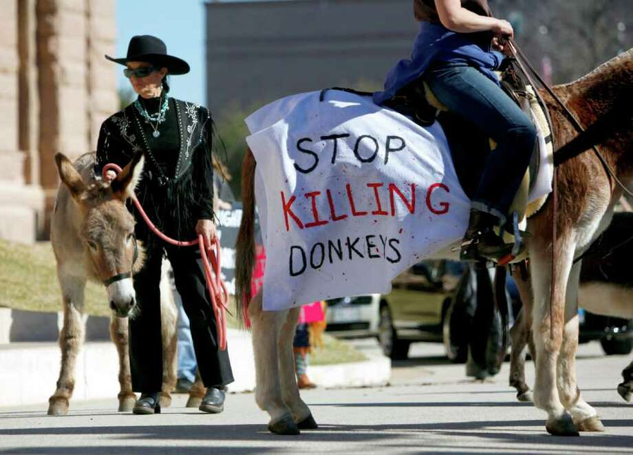 Wild Burro Protection League founder Marjorie Farabee stands outside the capitol in Austin in January after delivering a petition to the governor's office asking him to order the Texas Parks and Wildlife t to stop killing wild burros. Photo: William Luther / © 2012 SAN ANTONIO EXPRESS-NEWS