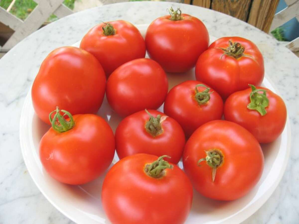 Florida tomatoes in your future? (Times Union archive)
