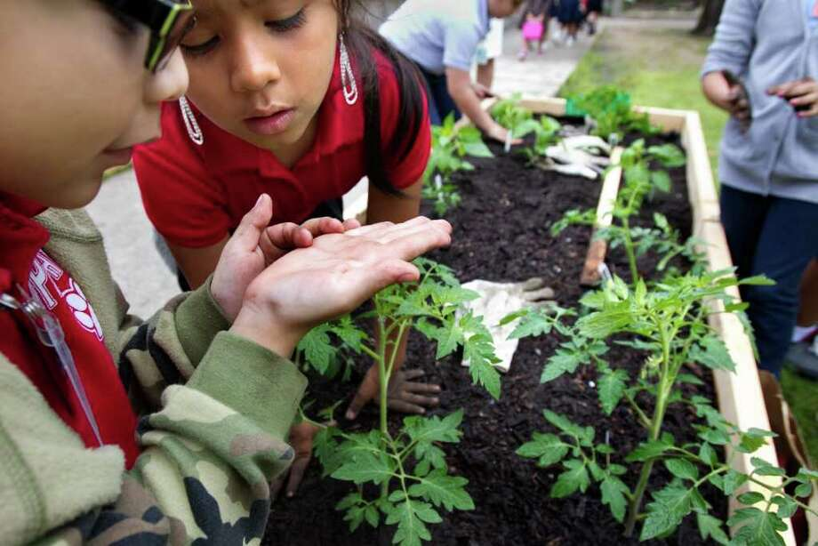 Second graders Caiden Trevino, left, and Aylinne Reyes, right, look at a small seed before planting it during Teaching Garden Plant Day Celebrations at Crespo Elementary School. The American Heart Association, along with the support of local and national sponsors, use the gardens as a tool to build a foundation of healthy habits. Photo: Cody Duty, Houston Chronicle / © 2011 Houston Chronicle