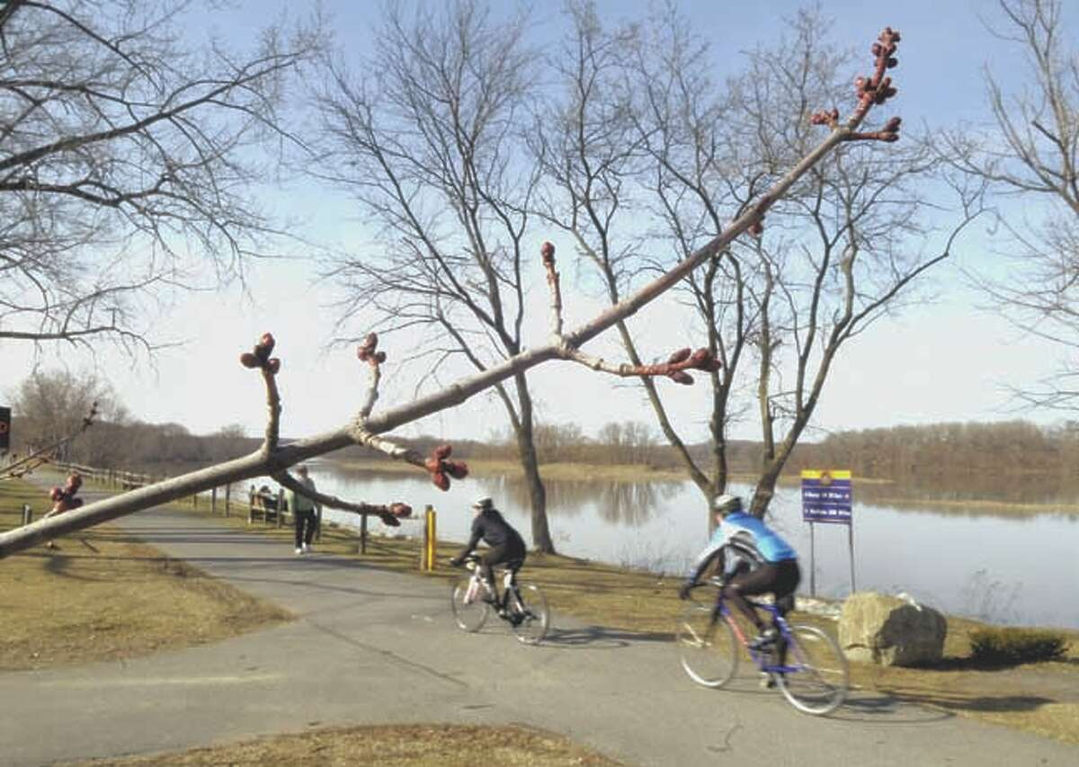 Tree buds along the Mohawk River on March 20, 2011. (Paul Buckowski / Times Union)