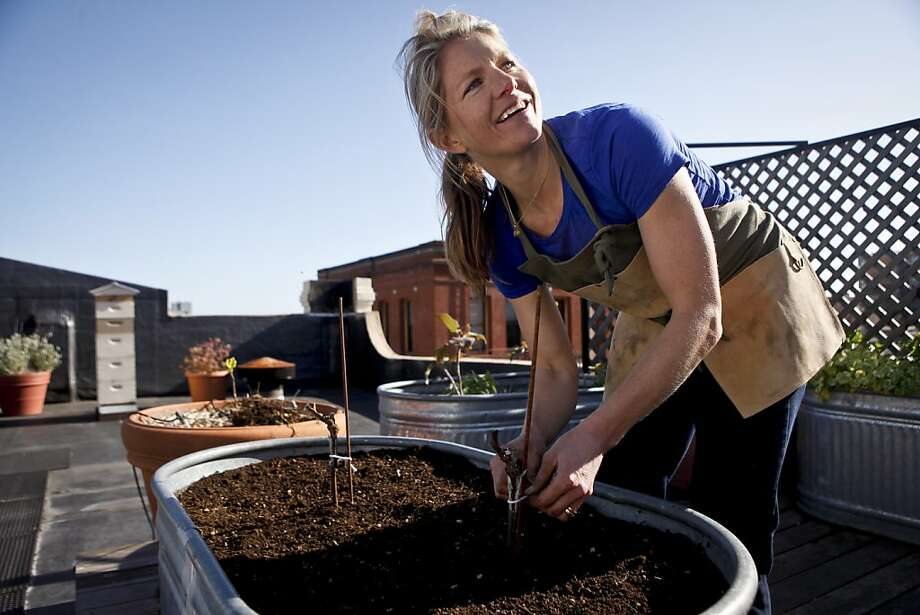 Napa viticulturist Annie Gavia plants a grapevine in the Chronicle rooftop garden on Monday, March 5, 2012 in San Francisco, Calif. Photo: Russell Yip, The Chronicle