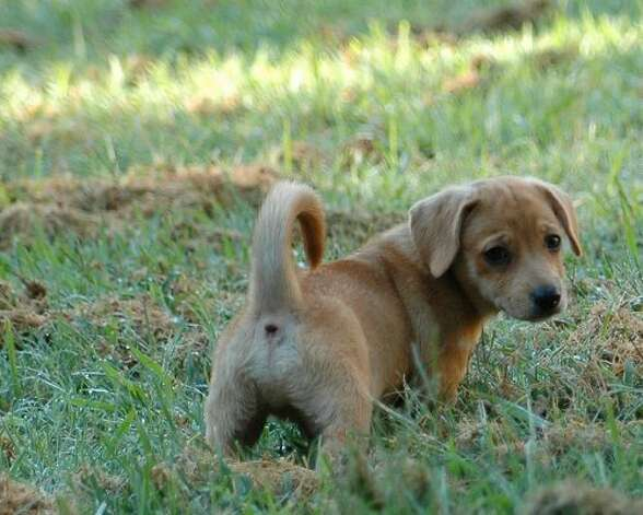 A puppy romps in the grass. (Flickr/romsrini)
