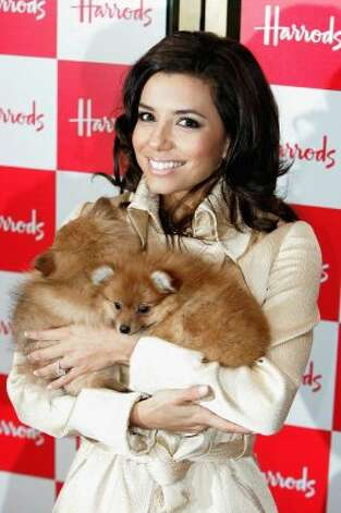 Actress Eva Longoria poses for the media with a puppy outside the pet department at the opening of the Harrods January Sale at the Knightsbridge depatrment store. (Getty Images)