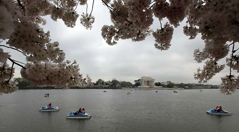 Boaters take in the view from the Tidal Basin as the Cherry Blossoms bloom, Thursday, March 22, 2012, in Washington. (AP Photo/Haraz N. Ghanbari) Photo: Haraz N. Ghanbari, Associated Press