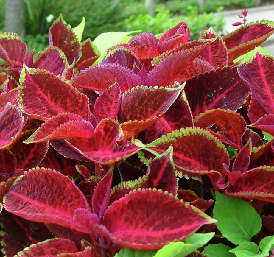 Plant flowers now and enjoy color all summer - San Antonio Express-News