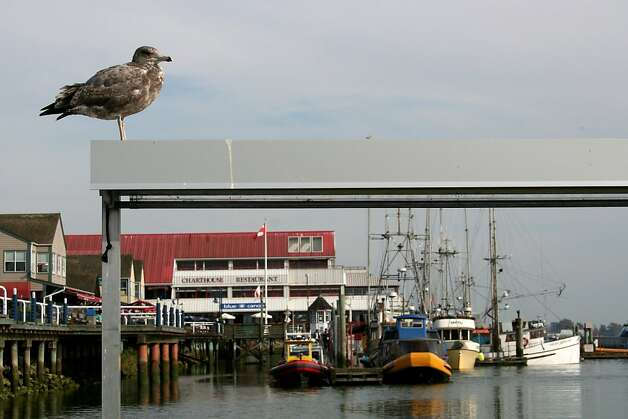 The Steveston Wharf, Canada's largest commercial fishing port. Photo: Susan Rybar