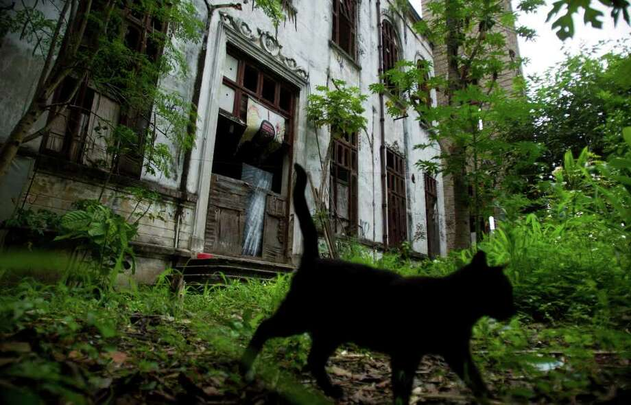 In this Tuesday Jan. 31, 2012 photo, a cat walks by the old Indian Museum located near the Maracana soccer stadium in Rio de Janeiro, Brazil.  Dozens of indigenous people who have built homes on the site of Rio's old Indian Museum, abandoned since 1977, will have to move as part of the neighborhood's makeover for the 2014 World Cup. Carlos Tukano, the group's leader, says the space provides a place to stay for indigenous people visiting Rio, whether looking for medical care, pursuing their education or hawking crafts to tourists on the beach. (AP Photo/Victor R. Caivano) Photo: Victor R. Caivano / AP