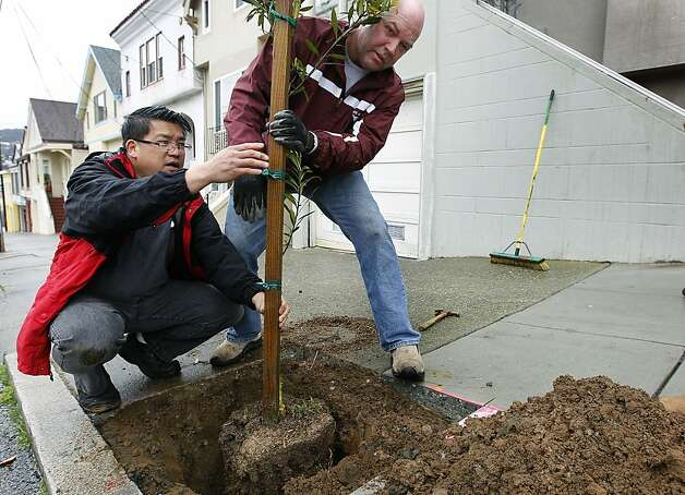 Craig Wong (left) plants a tree in his Excelsior District neighborhood with George von Zedlitz, one of 55 put into the ground by Friends of the Urban Forest, in San Francisco, Calif. on Saturday, March 24, 2012. Photo: Paul Chinn, The Chronicle