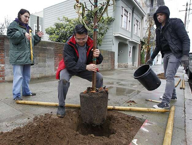 Craig Wong (center) plants a tree near his Excelsior District home with an assist from neighbors Arminda King (left) and Oliver Austria, at an area planting project by Friends of the Urban Forest, in San Francisco, Calif. on Saturday, March 24, 2012. Photo: Paul Chinn, The Chronicle