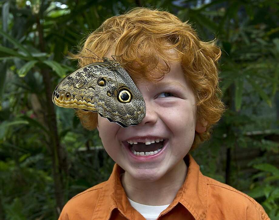 Apt pupil of butterflies: At San Diego Zoo Safari Park, a Giant Owl butterfly lands on the face of 5-year-old Mac Jarman, upsetting his ocular equilibrium. Photo: Ken Bohn, Associated Press