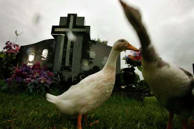 7/26/06--Ducks stand near the Yates children grave site Wednesday afternoon, July 26, 2006, at the Forest Park East cemetery in Webster, Texas.  Their mother Andrea Yates who earlier was convicted of killing her five children was found not guilty today after her retrail. Photo: Kevin Fujii, Houston Chronicle / Houston Chronicle