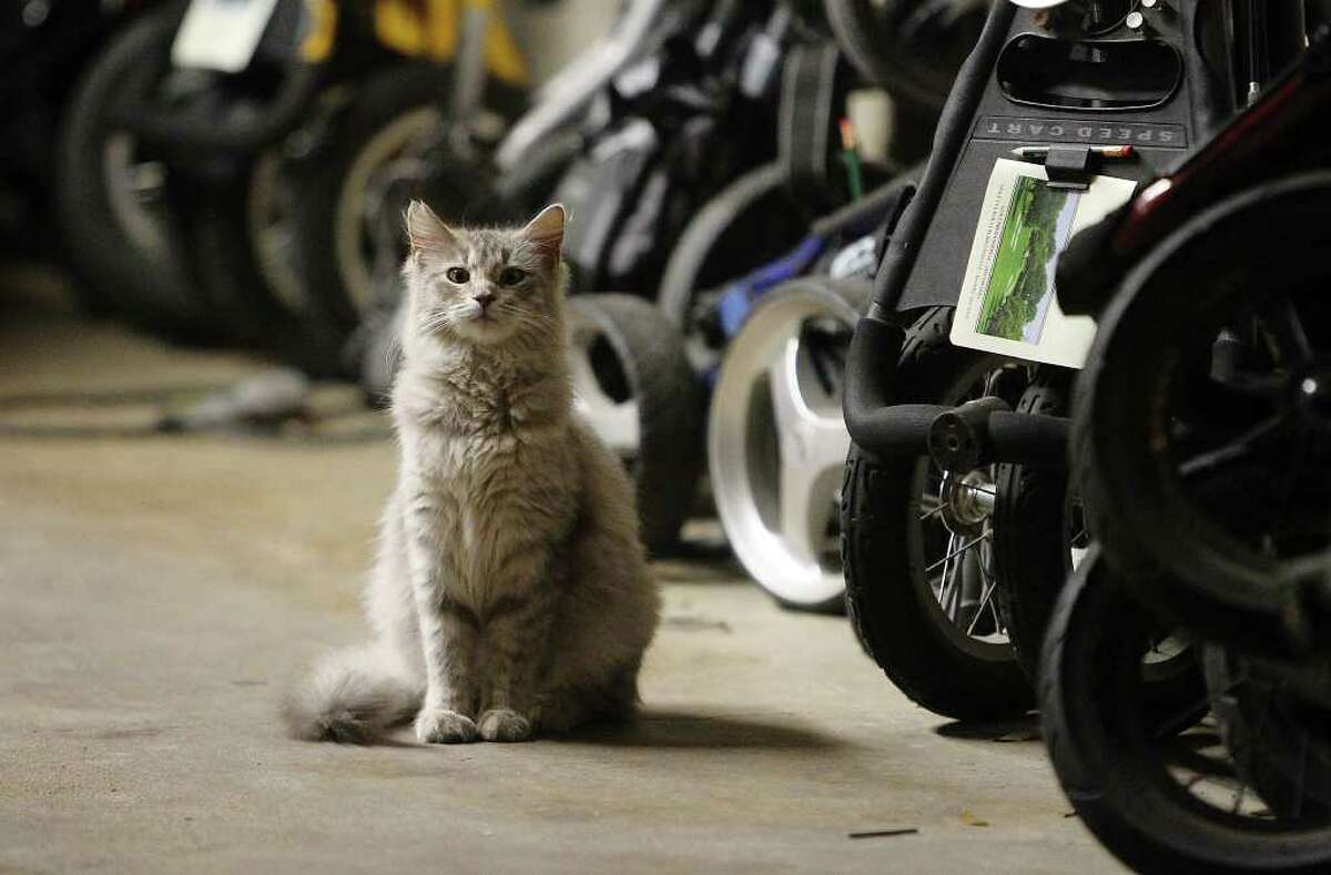 The Texas Barn Cat-San Antonio Feral Cat Coalition's Working Cat Program finds homes for feral felines that can't be pets but are perfectly suited to be
