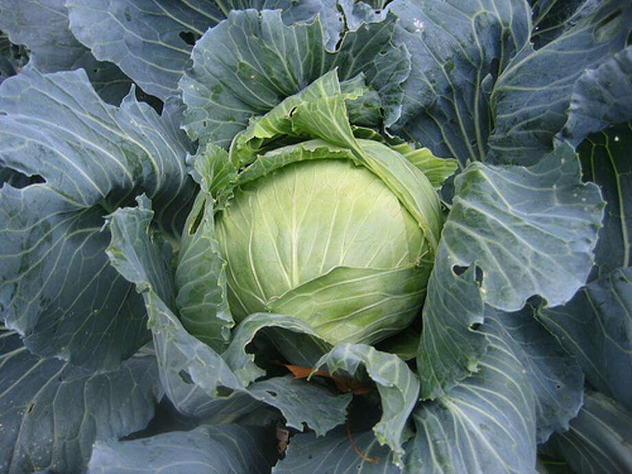 cabbage recipes needed!
