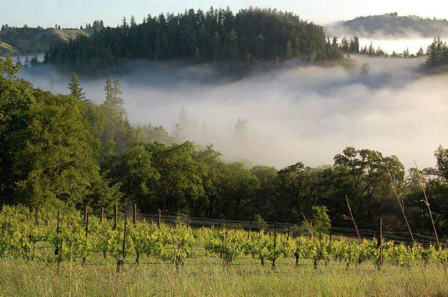 The fog at Camp Meeting Ridge Vineyard and Winery. Photo: Courtesy Photo