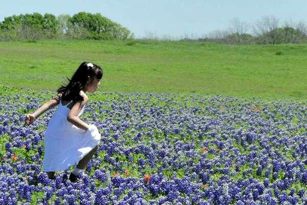 Mizuki Fukuda, 6, runs through bluebonnets outside Ennis. It's a Texas tradition to shoot family photos in bluebonnet patches.