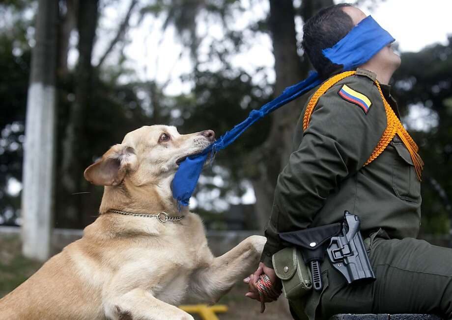 "Any last words, Señor? A police K-9 adjusts the blindfold on a ""suspect"" during an exercise in Medellin, Colombia. Photo: Raul Arboleda, AFP/Getty Images"