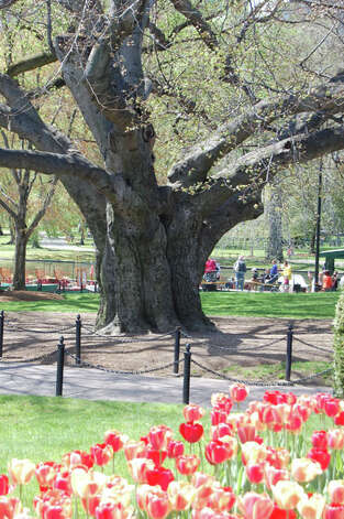 The Boston Public Garden is the nation's first botanical garden. (Photo courtesy of Boston Parks and Recreation Department)