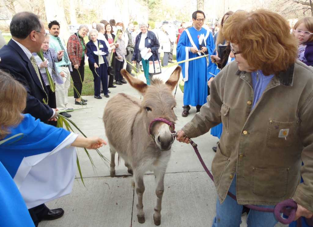 Donkey Brings Special Meaning To Palm Sunday Service Fairfield Citizen