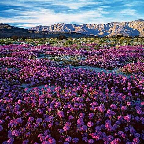 "<b>Hike amid desert wildflowers:</b> The beauty of Anza-Borrego Desert State Park's wildflower bloom-often the best in California, and one of the best in all the West-is not just the physical display but its ephemeral nature. This is glory on the go. <b>Read more:</b> <a href=""http://www.sunset.com/travel/outdoor-adventure/top-10-waterfalls-00400000011551/?xid=sfg-sunset-030112%3C"">Top 10 waterfalls</a> <br style=""clear:both;"" /><a href=""http://www.sunset.com"" target=""_blank"" class=""sunsetlogo""><img src=""http://imgs.sfgate.com/graphics/partners/sunset/sunset_logo.gif"" alt=""Sunset"" border=""0""/></a> Photo: Larry Ulrich, Sunset.com"