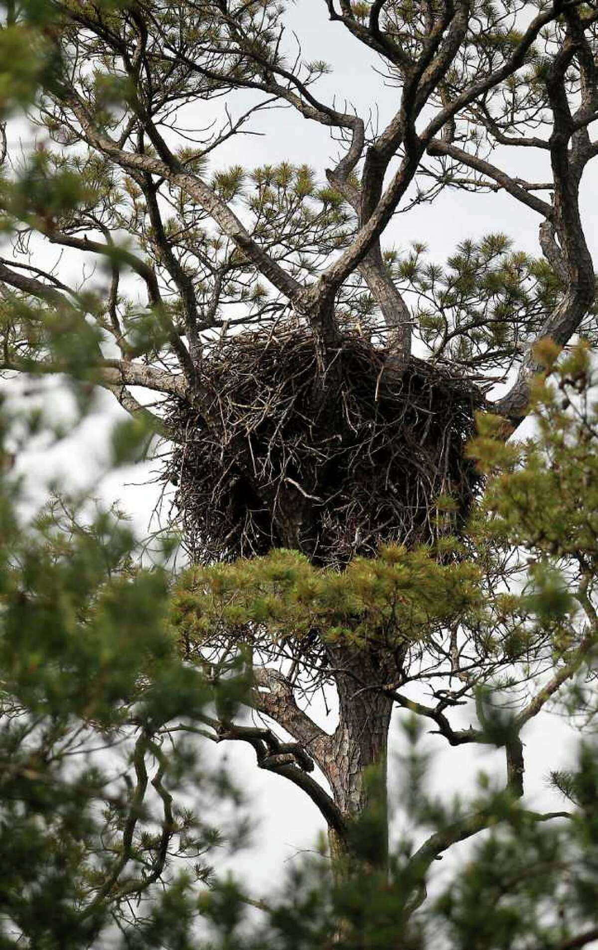 Responding to the deaths of bald eagles, CenterPoint Energy installed
