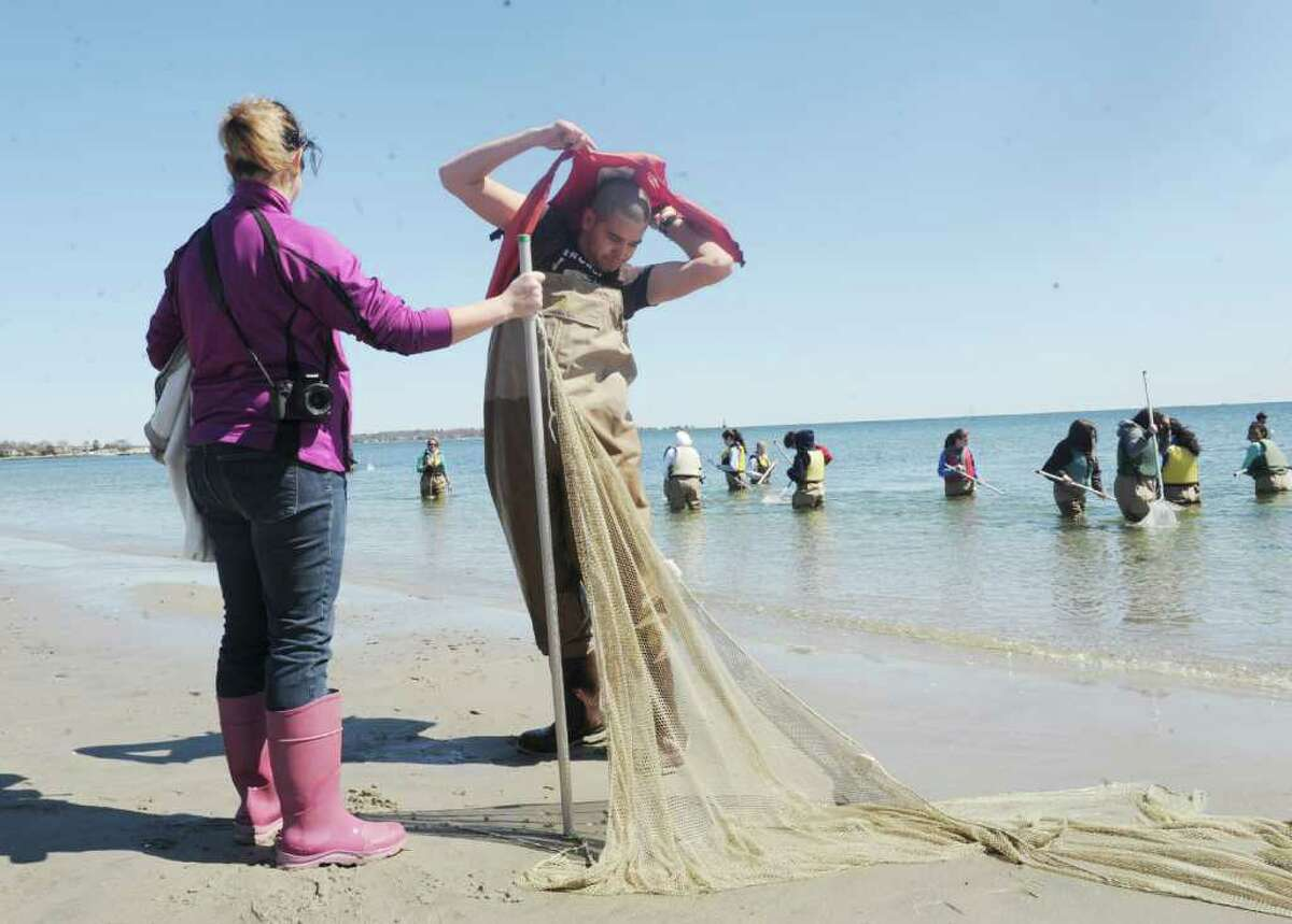 Victor Arenas, 16, puts on a life saver while teacher Jenna Carson, holds a net during a field study at Greenwich Point Tuesday, April 3, 2012. More than 200 Greenwich High School marine science students are engaged in a long-term study of the oyster, a species native to Long Island Sound.