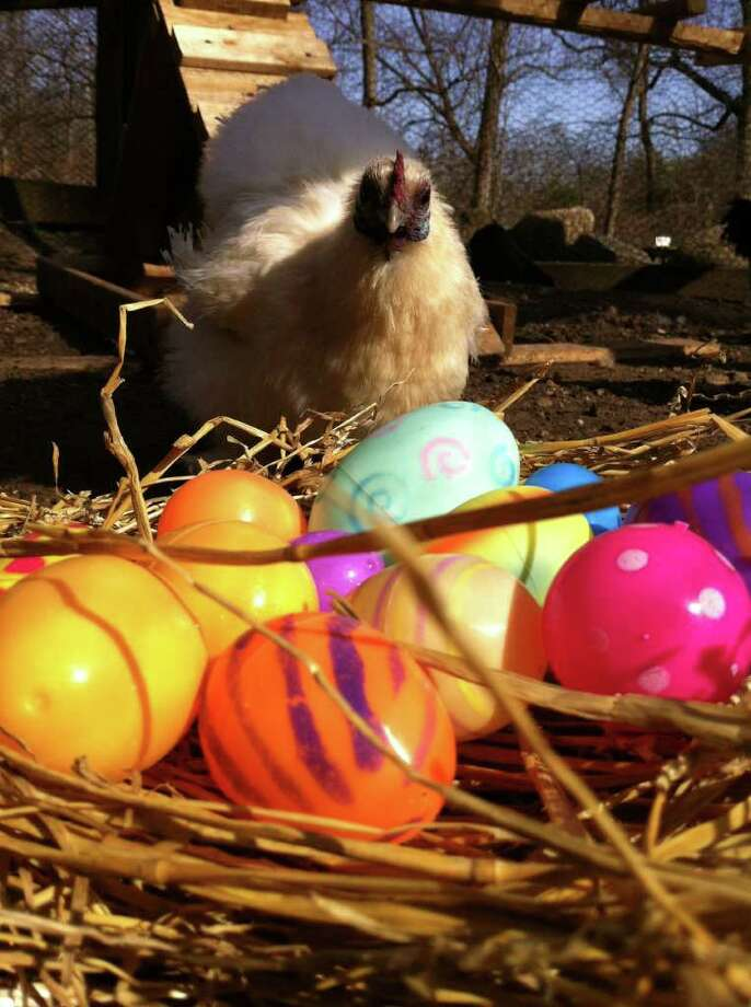 """The Stamford Museum and Nature Center will host its eighth annual egg hunt, Saturday, April 7, at its Heckscher Farm, from 10 a.m. to noon. It is open to children 6 and younger. In addition, there will be a program """"Excellent Eggs"""" at Overbrook Nature Center, 10 a.m. to 1p.m. For more information on the programs or admission fees, visit www.stamfordmuseum.org or call 203-322-1646. Contributed photo/Christine D'Andrea Photo: Contributed Photo"""