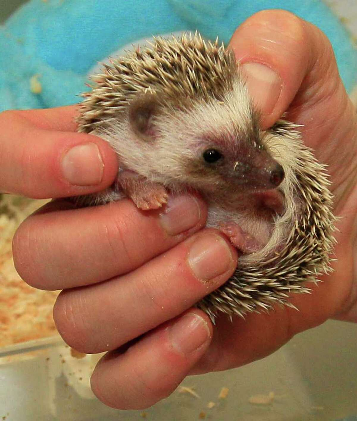 Animals She especially loved small animals, including hedgehogs, and had two rabbits in succession named Benjamin Bouncer and Peter Piper.