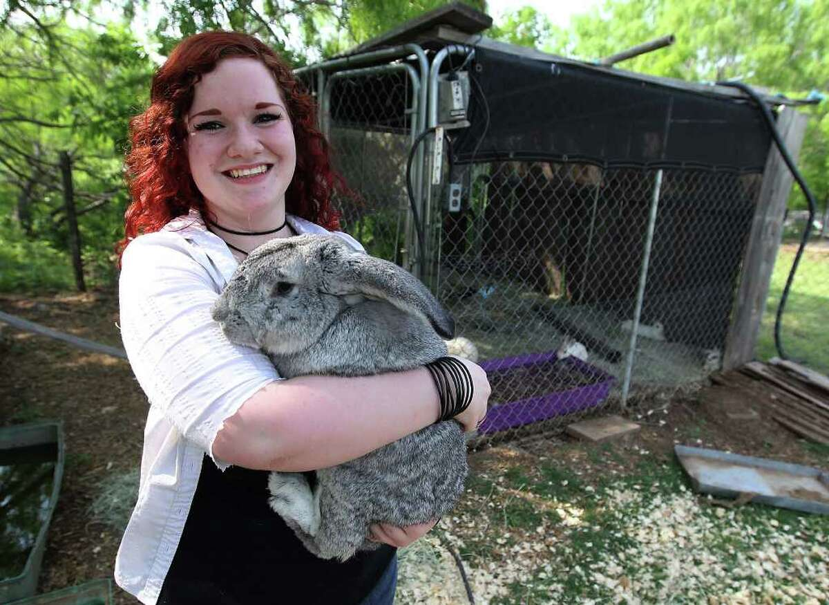 Cheyenne Hendricks, 16, holds onto a rabbit named, No No Bad Bunny at the Retired Rabbit Sanctuary on Apr. 3, 2012. Cheyenne and her parents run the sanctuary in Eastern Bexar County.