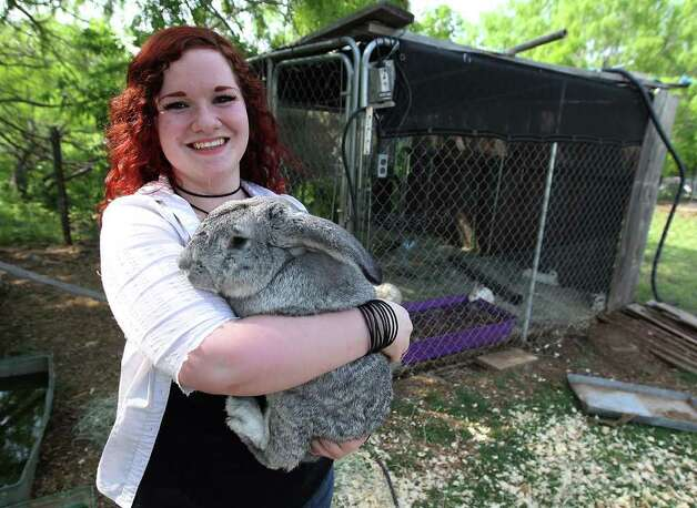Cheyenne Hendricks, 16, holds onto a rabbit named, No No Bad Bunny at the Retired Rabbit Sanctuary on Apr. 3, 2012. Cheyenne and her parents run the sanctuary in Eastern Bexar County. Photo: Kin Man Hui, San Antonio Express-News / ©2012 San Antonio Express-News