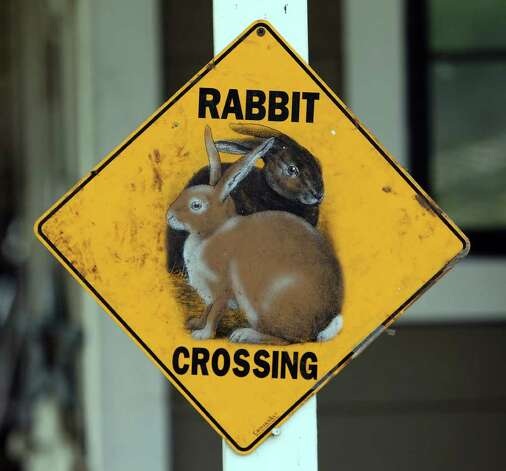 A posted sign cautions visitors of the nearly 80 rabbits that live at the Retired Rabbit Sanctuary. Cheyenne Hendricks, 16, and her parents run the sanctuary in Eastern Bexar County. Since 1998, the Hendricks family took in rabbits that were discarded typically around Easter by people who underestimated the amount of care needed for rabbits. The sanctuary now has about 80 rabbits in enclosures and are caring for the fuzzy creatures on a daily basis. The sanctuary is funded by the Hendricks family but they won't rule out donations. On her spare time, Cheyenne, helps to educate the public on the caring for rabbits at the Humane Society in San Antonio. Kin Man Hui/Express-News. Photo: Kin Man Hui, San Antonio Express-News / ©2012 San Antonio Express-News