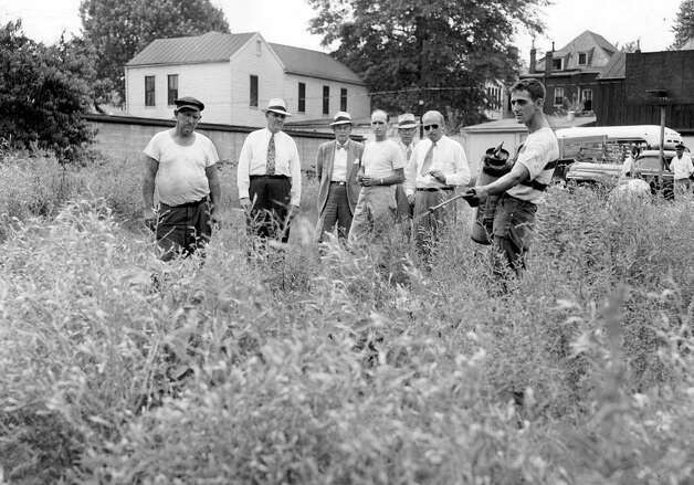 In this summer, 1952, photo hemp plants growing wild on a lot in downtown Louisville, Ky., are killed with chemical spray. Efforts to restore the crop that decades ago was a major industry in Kentucky appear to be growing despite the defeat of another legalization effort in the state's 2012  General Assembly. The tall, leafy plant was outlawed because of its similarity to marijuana, but supporters argue it's nearly impossible to get high by smoking hemp. (AP Photo/Louisville Courier-Journal) NO SALES, NO ARCHIVE, MAGS OUT / AL