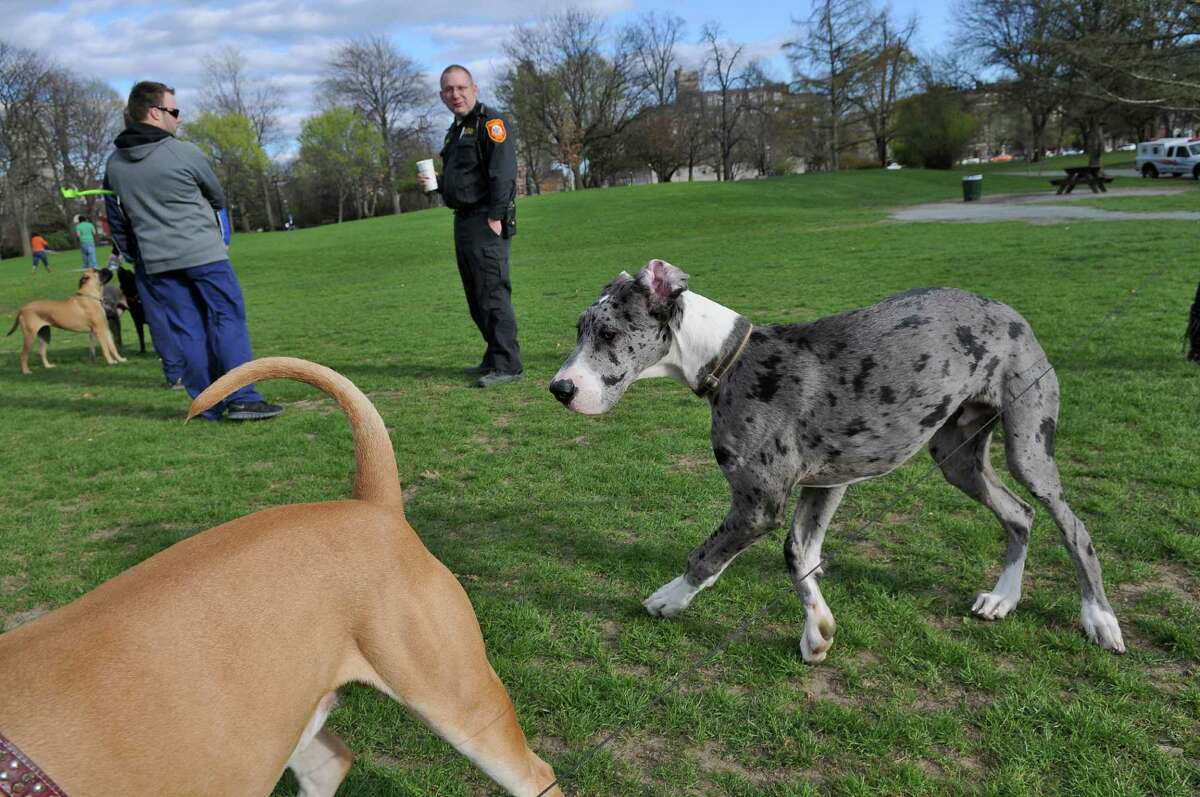 Albany Animal Control officer Jason Hogan, center, visits with dog owners and their pets in Washington Park on Thursday afternoon April 5, 2012 in Albany, NY. (Philip Kamrass / Times Union )