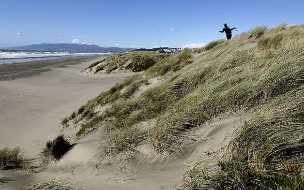 Sand dunes along Ocean Beach are vulnerable to erosion from Fulton to Noriega streets. A plan to restore the sand dunes is part of a new proposal. Photo: Michael Macor, The Chronicle