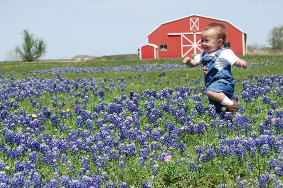 Nathan in the Bluebonnets by dav345 (DAV345)