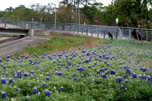 White Oak Bayou TC Jester at 11th Street --  WHITE OAK BAYOU BLUEBONNETS